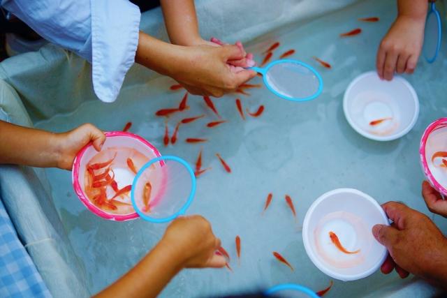 縁日の金魚すくいをする子供たち