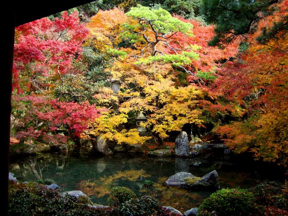 秋 京都 紅葉