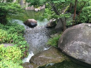 目白庭園滝 上から