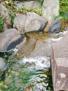 目白庭園 滝